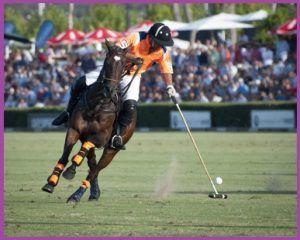 Deportes de con caballos