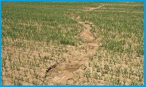 Erosión antrópica