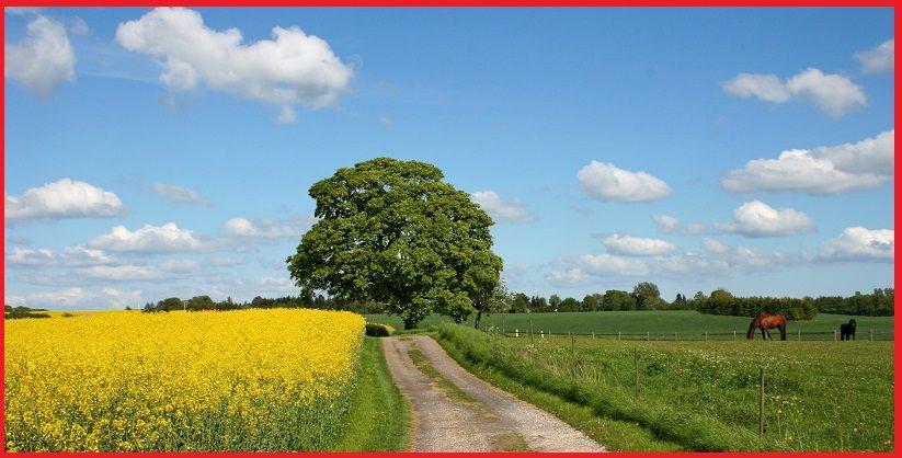 Diferentes tipos de paisajes. (Con ejemplos y fotos)